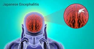 Japanese Encephalitis (JE) Therapeutics